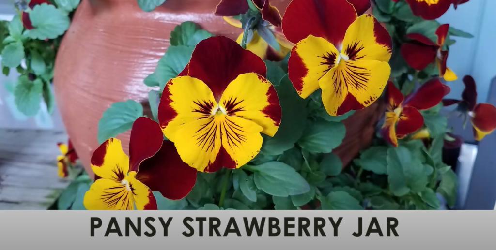 Pansy Strawberry Jar
