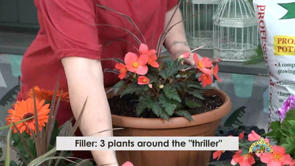 plant your filler around your thriller