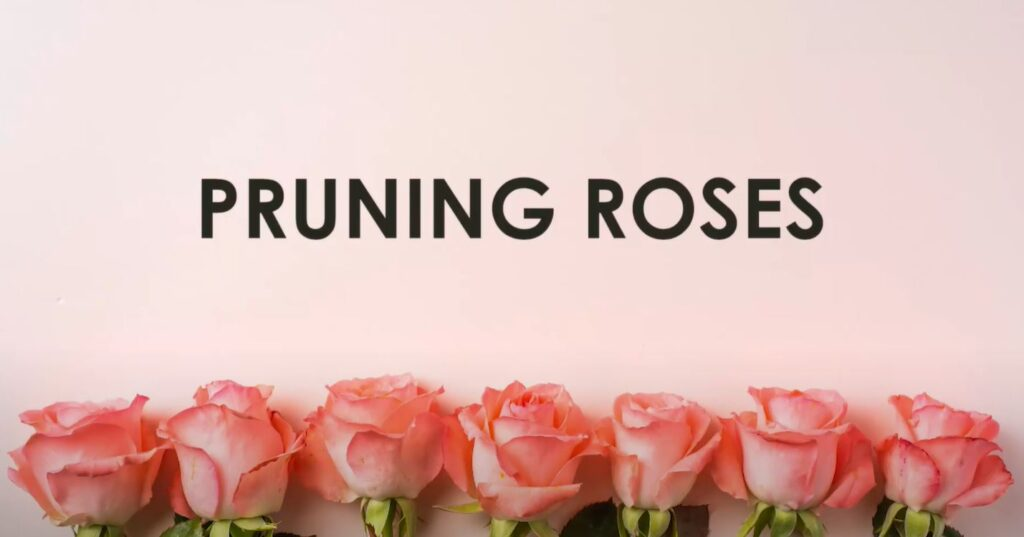 Pruning Roses Thumbnail