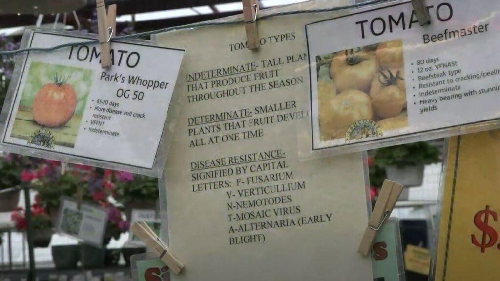 Tomato Terminology Signage