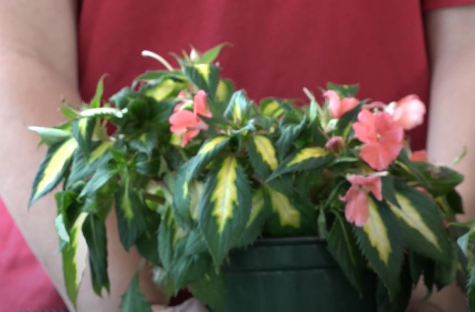 Water plants that are wilting